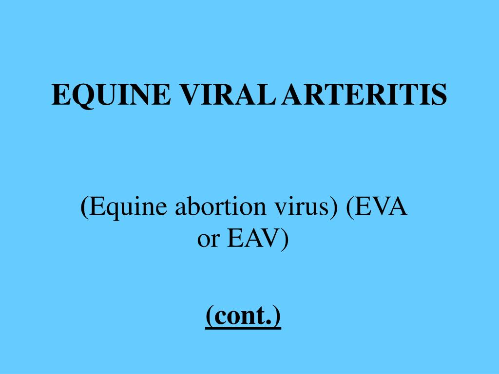EQUINE VIRAL ARTERITIS