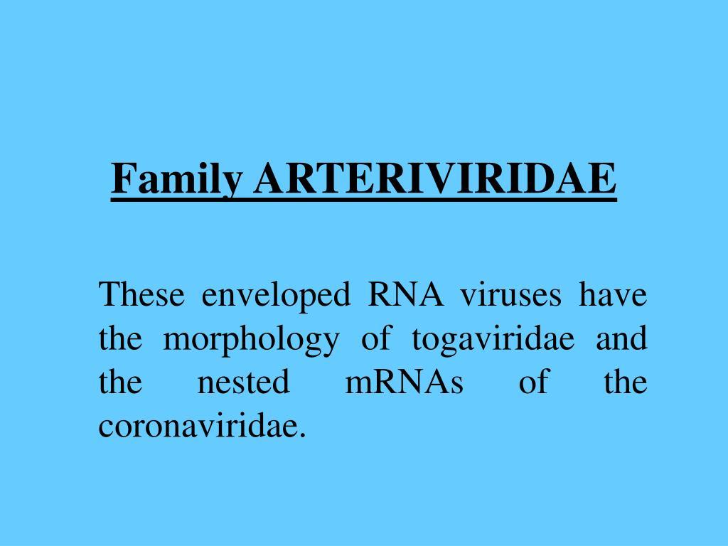 Family ARTERIVIRIDAE