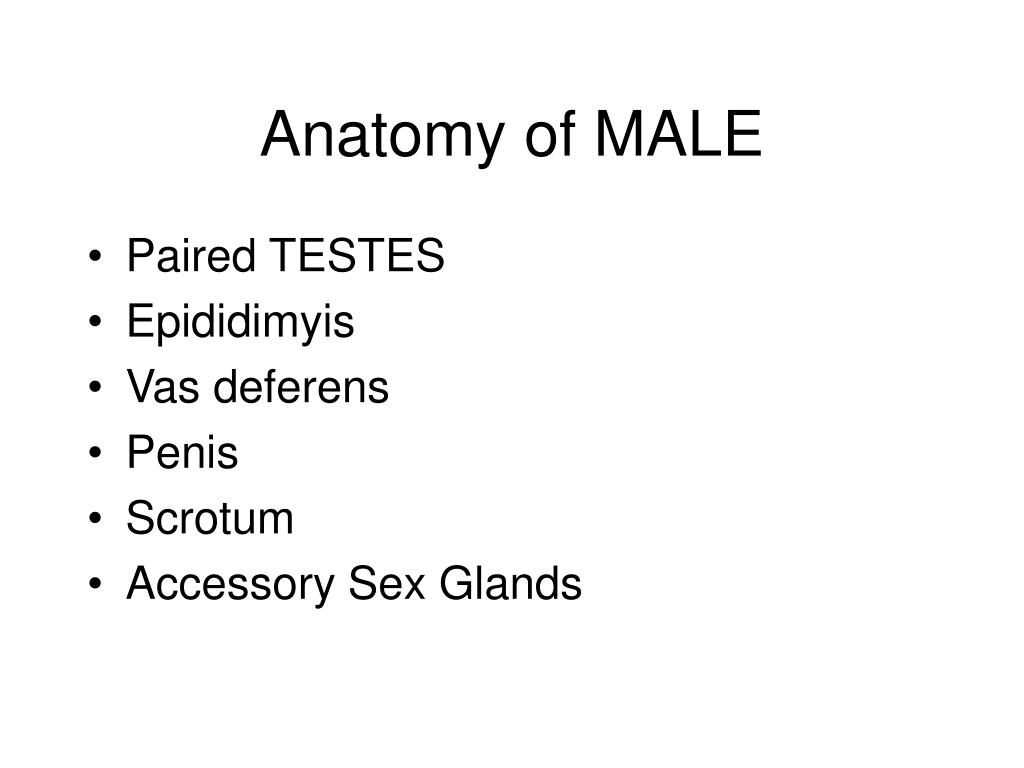 Anatomy of MALE