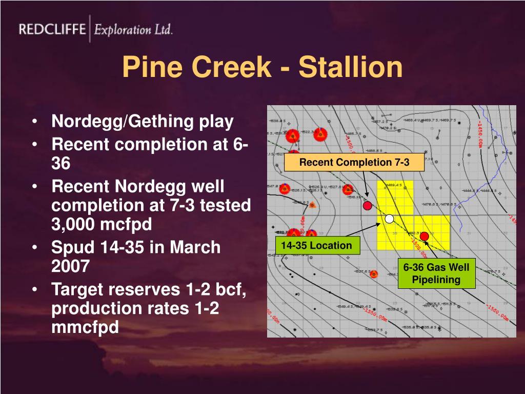 Pine Creek - Stallion