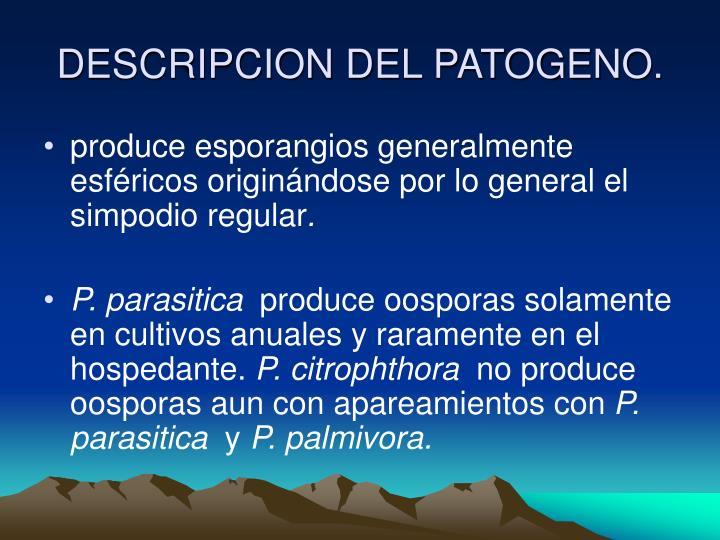 DESCRIPCION DEL PATOGENO.