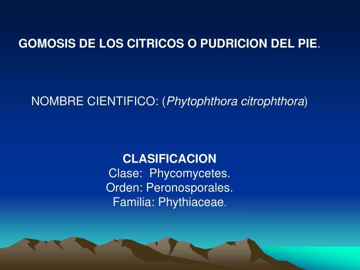 GOMOSIS DE LOS CITRICOS O PUDRICION DEL PIE