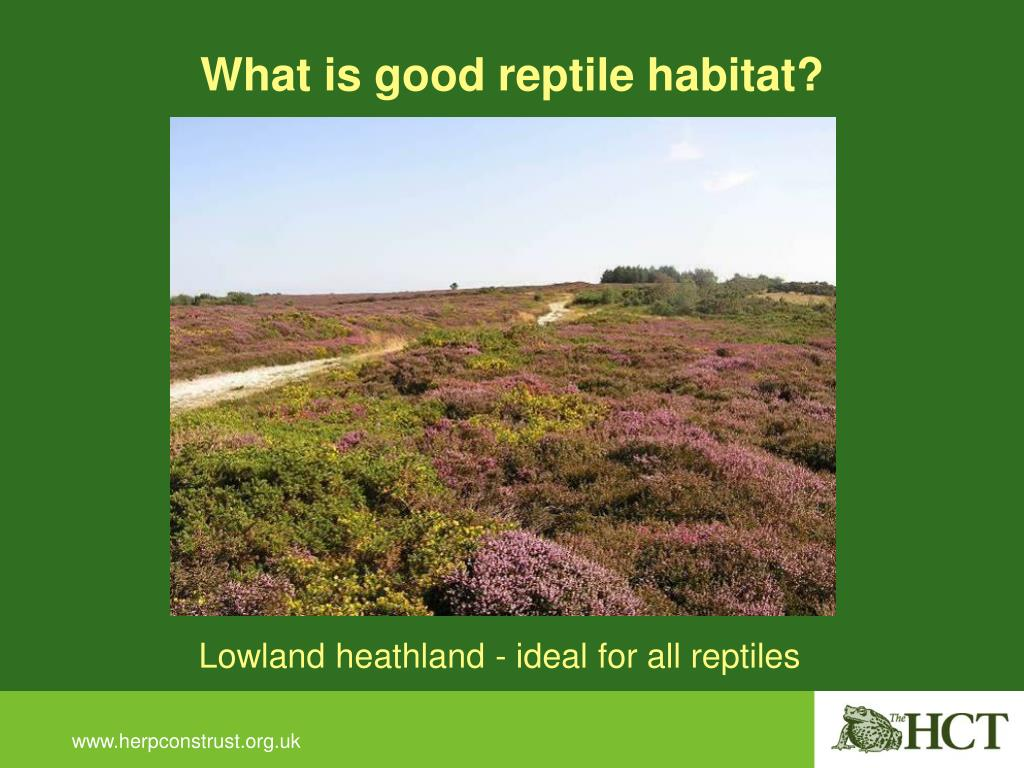 What is good reptile habitat?