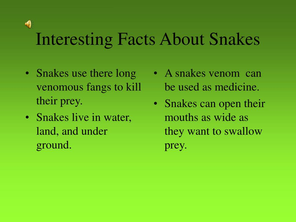 Snakes use there long venomous fangs to kill their prey.