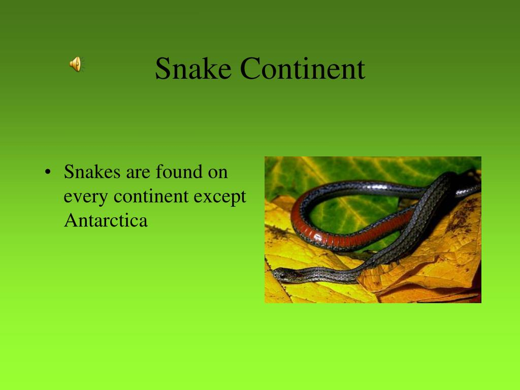 Snake Continent