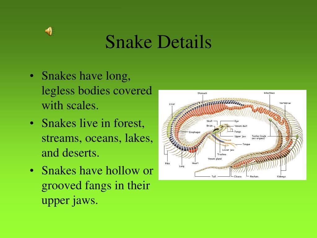 Snake Details