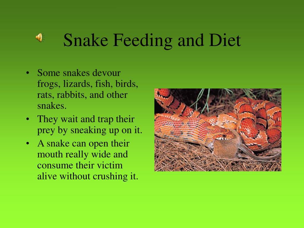Snake Feeding and Diet