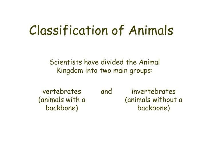 Classification of animals2