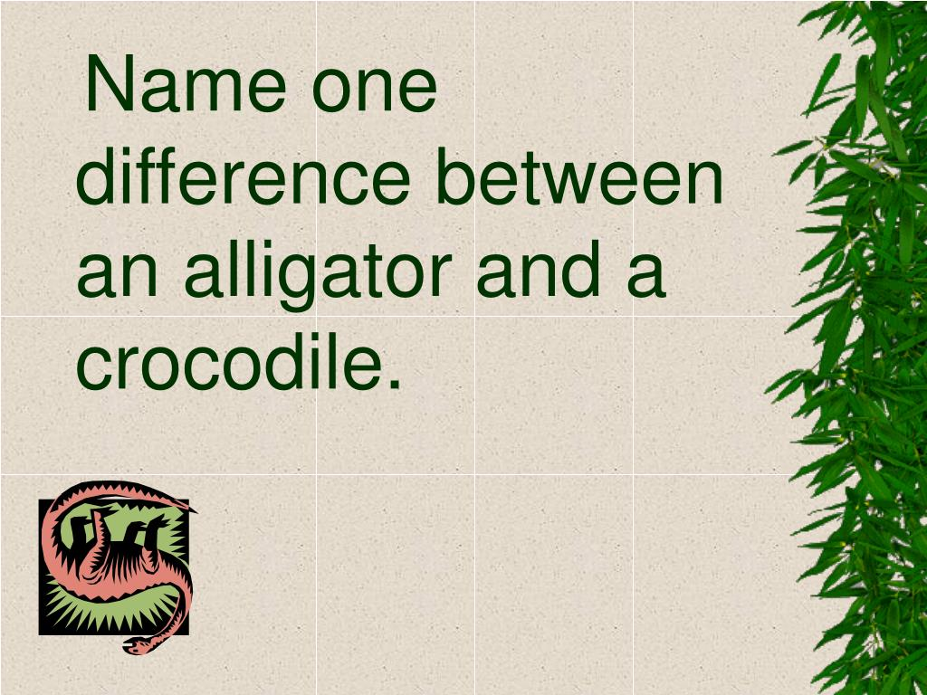 Name one difference between an alligator and a crocodile.