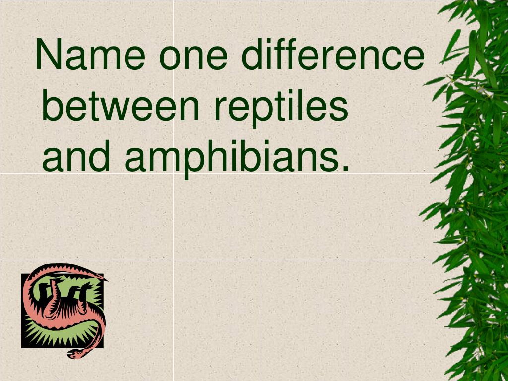 Name one difference between reptiles and amphibians.