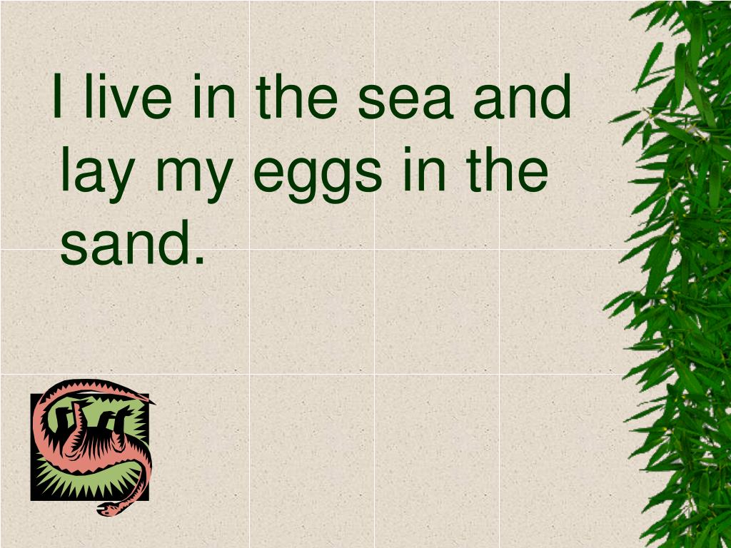 I live in the sea and lay my eggs in the sand.