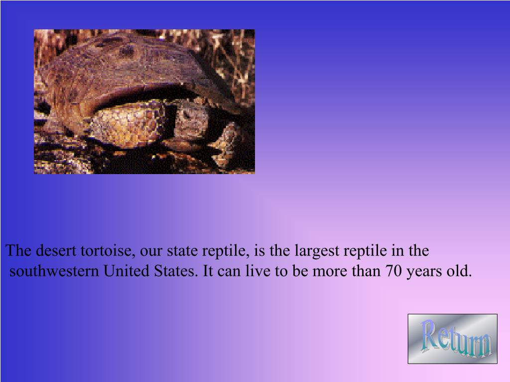 The desert tortoise, our state reptile, is the largest reptile in the
