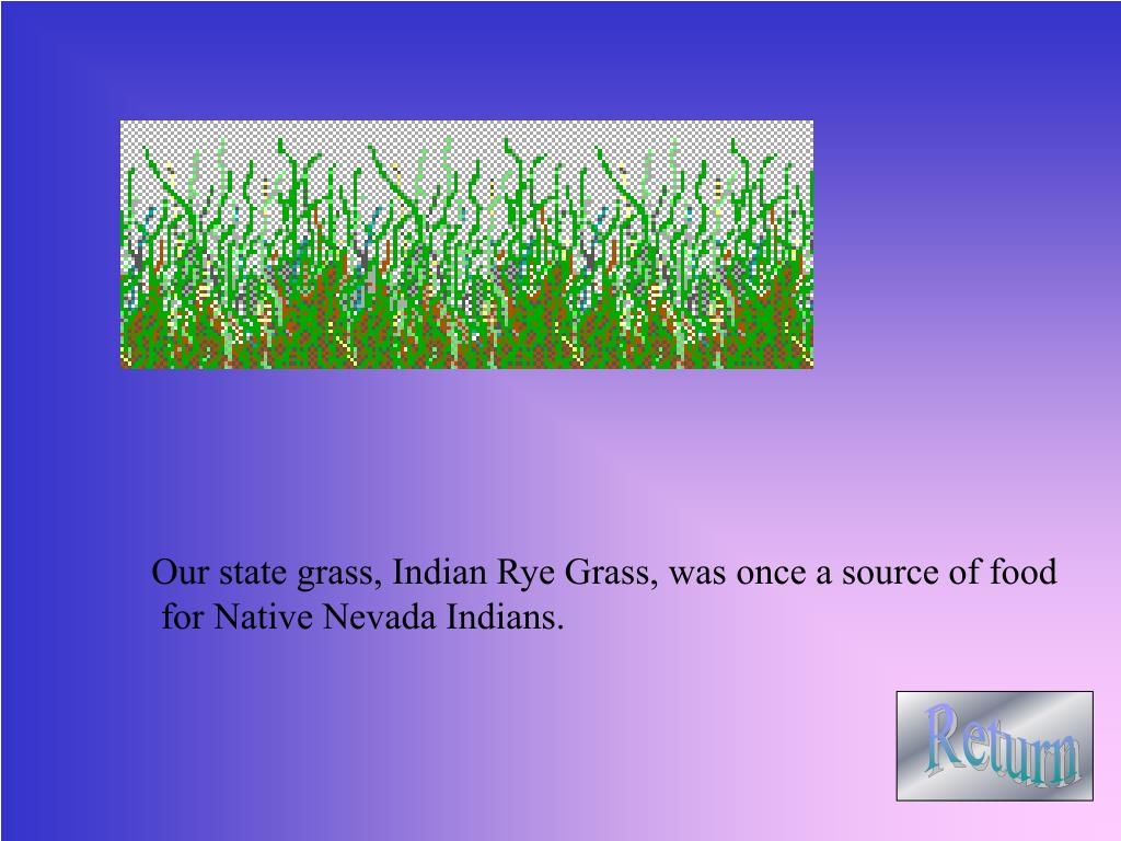 Our state grass, Indian Rye Grass, was once a source of food