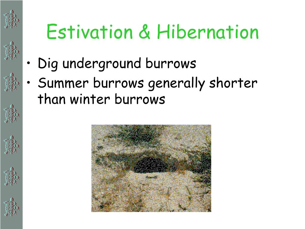 Estivation & Hibernation