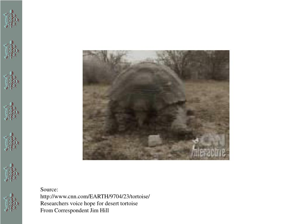 Source: http://www.cnn.com/EARTH/9704/23/tortoise/ Researchers voice hope for desert tortoise