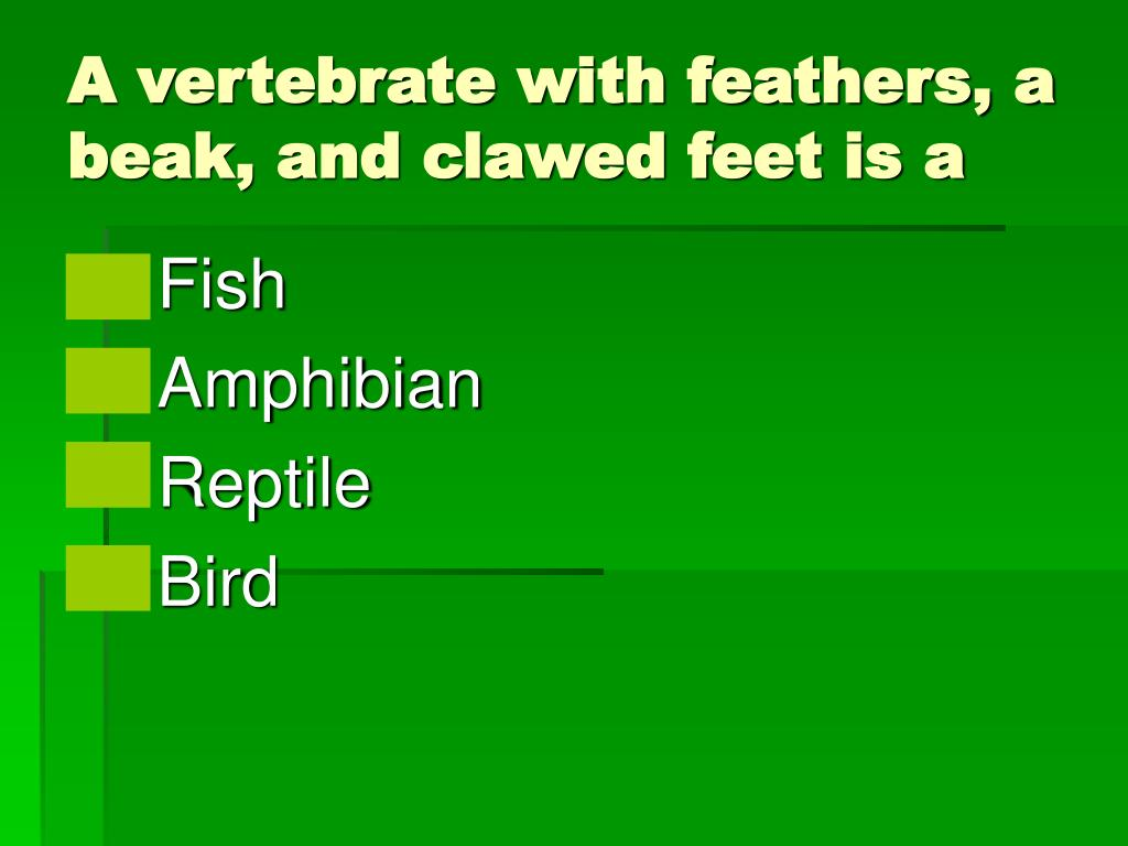 A vertebrate with feathers, a beak, and clawed feet is a