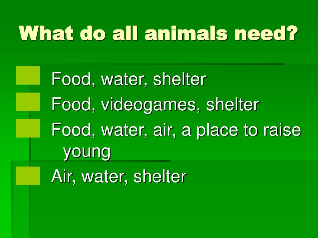 What do all animals need?