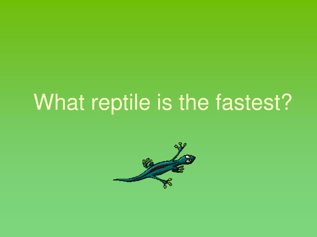 What reptile is the fastest?
