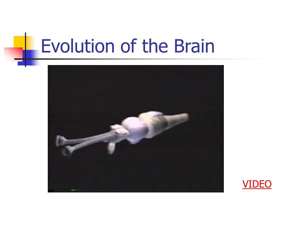 Evolution of the Brain