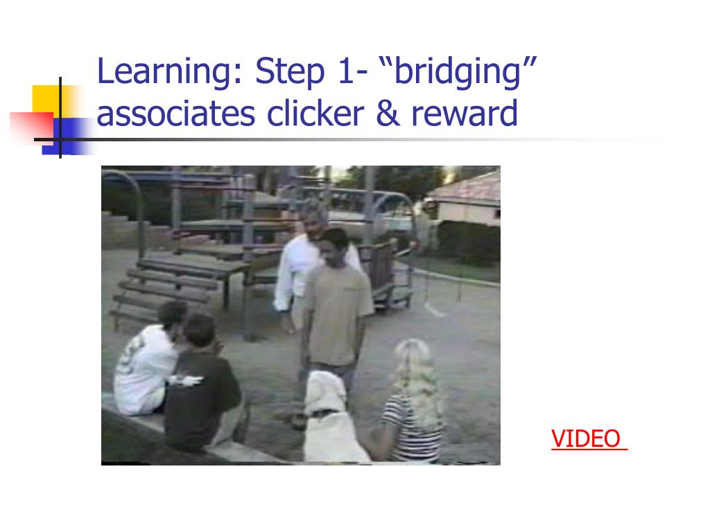 "Learning: Step 1- ""bridging"" associates clicker & reward"