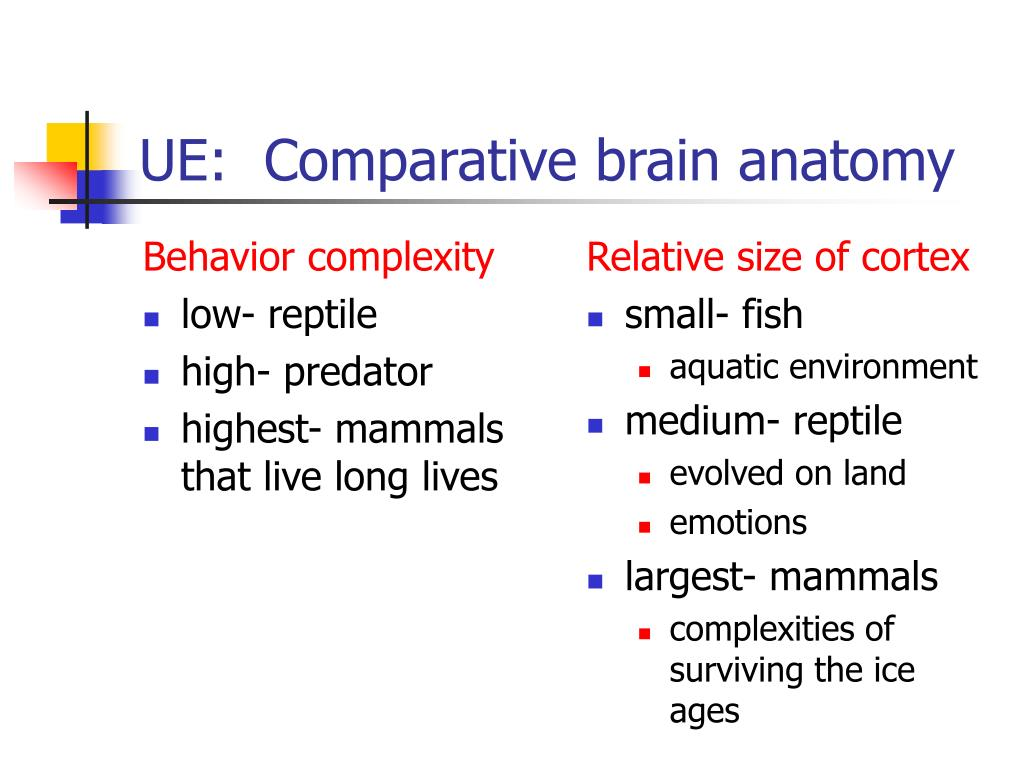 Behavior complexity