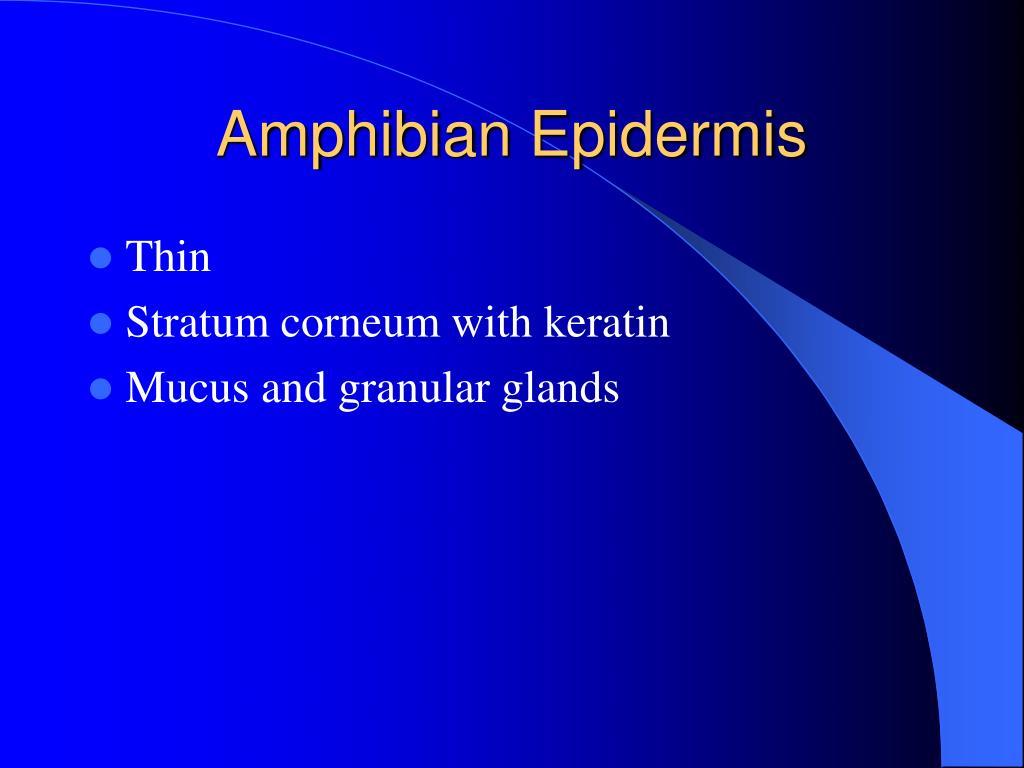 Amphibian Epidermis