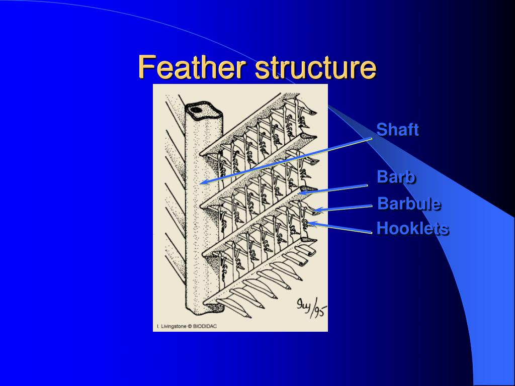 Feather structure