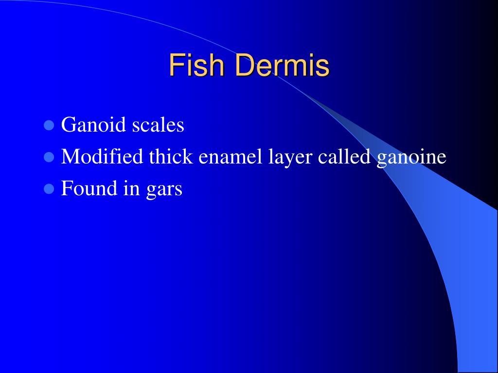 Fish Dermis