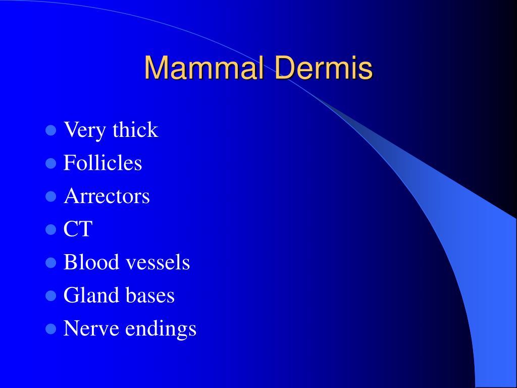 Mammal Dermis