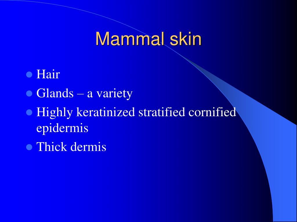 Mammal skin