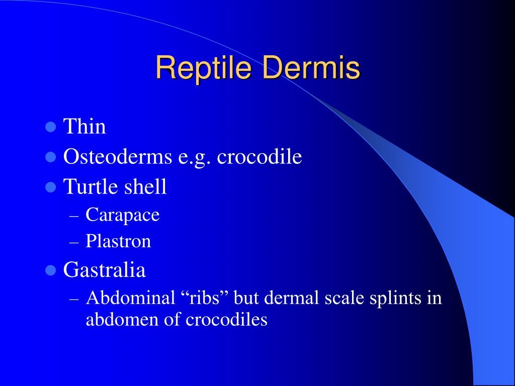 Reptile Dermis