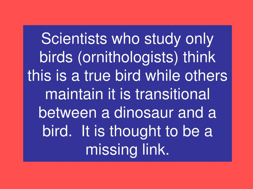 Scientists who study only birds (ornithologists) think this is a true bird while others maintain it is transitional between a dinosaur and a bird.  It is thought to be a missing link.