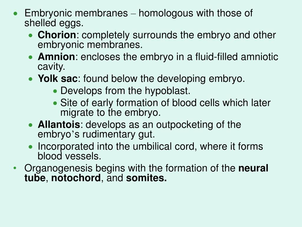 Embryonic membranes