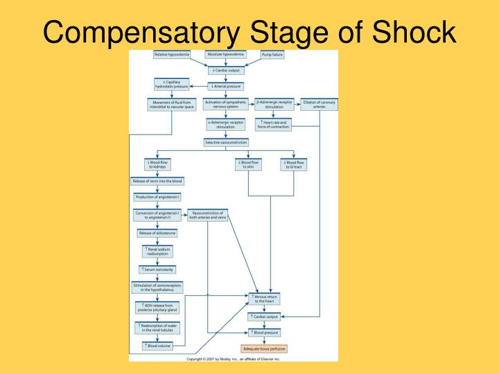 Compensatory Stage of Shock