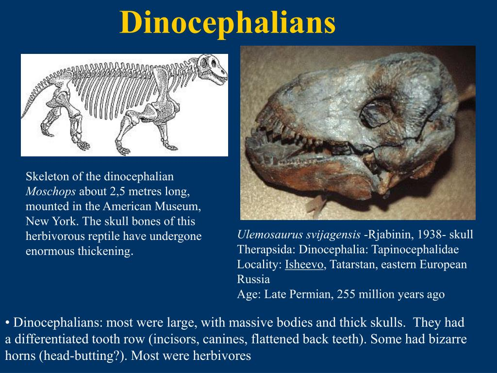 Dinocephalians
