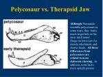 pelycosaur vs therapsid jaw