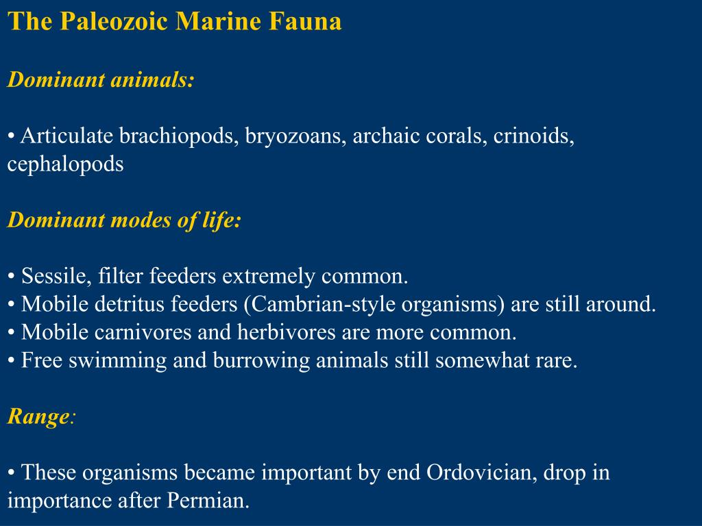 The Paleozoic Marine Fauna