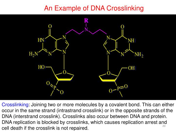 An Example of DNA Crosslinking