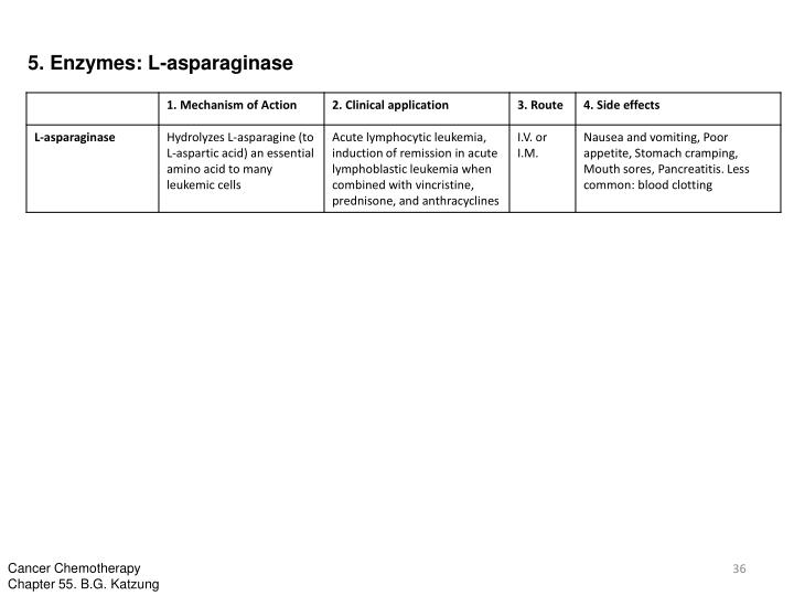 5. Enzymes: L-asparaginase
