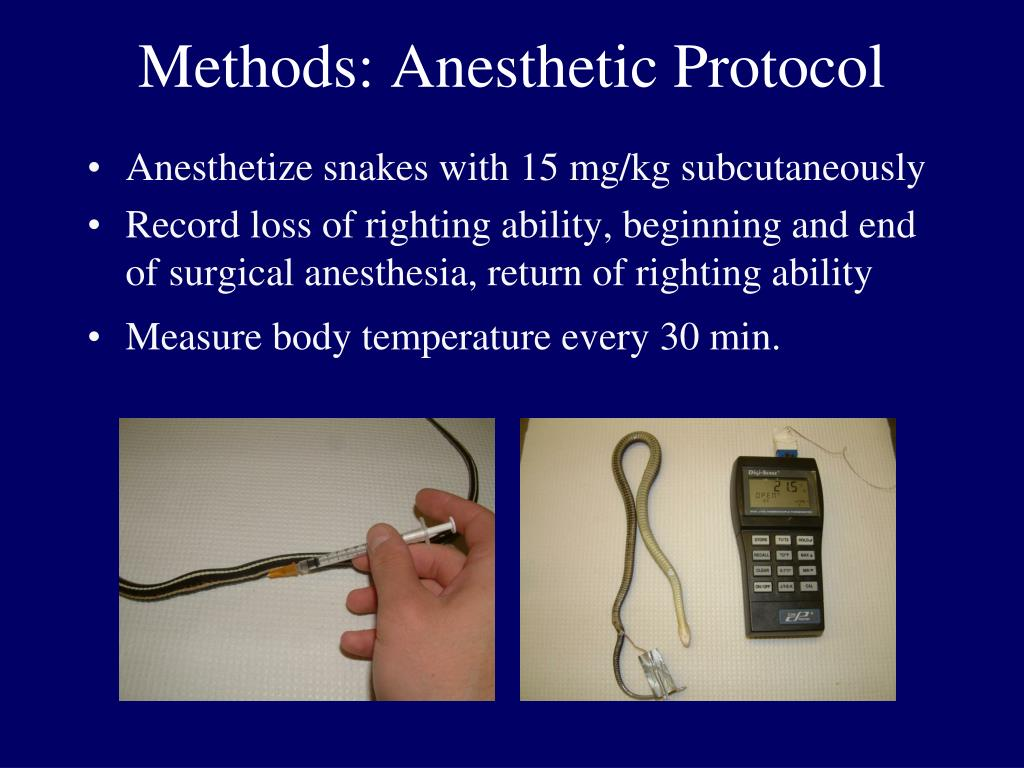 Methods: Anesthetic Protocol