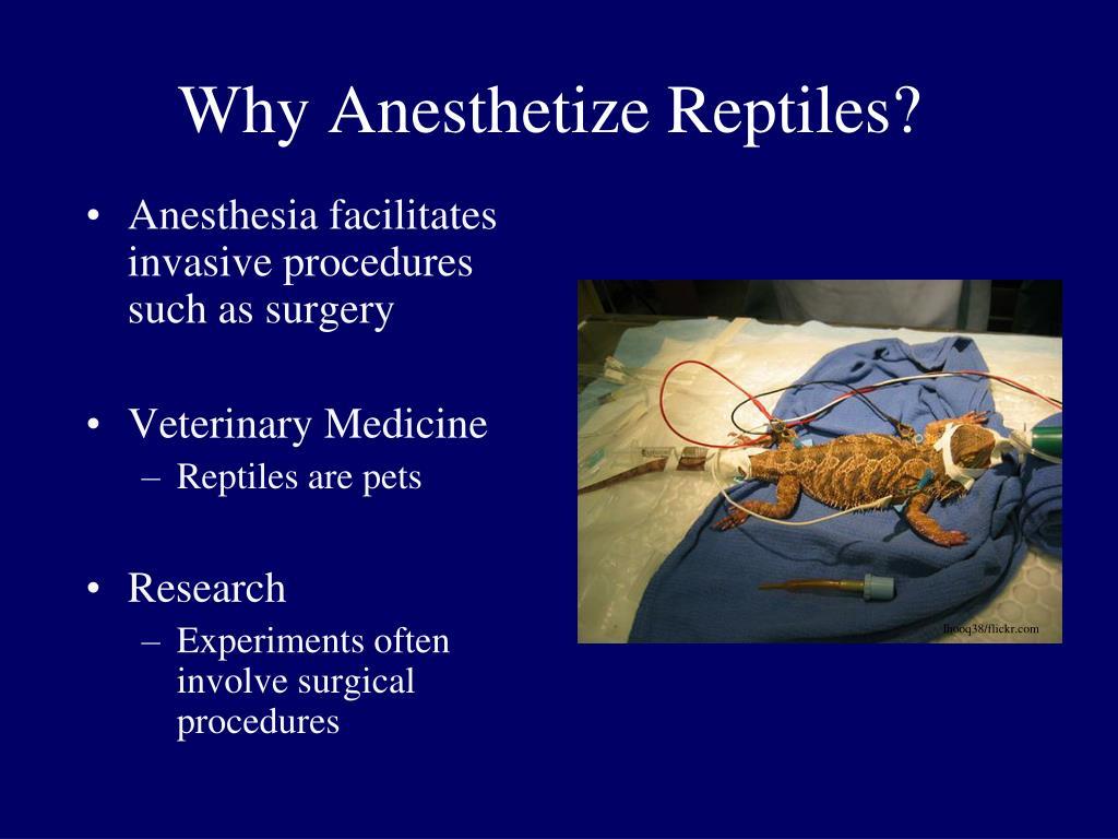 Why Anesthetize Reptiles?
