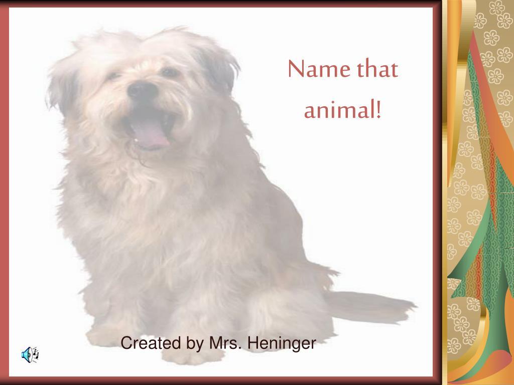 Name that animal!