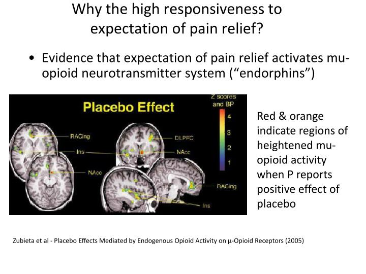 Why the high responsiveness to expectation of pain relief?