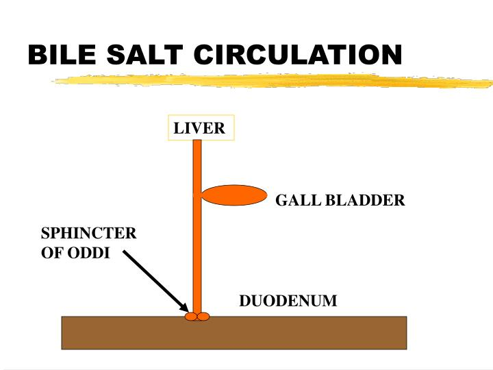 BILE SALT CIRCULATION
