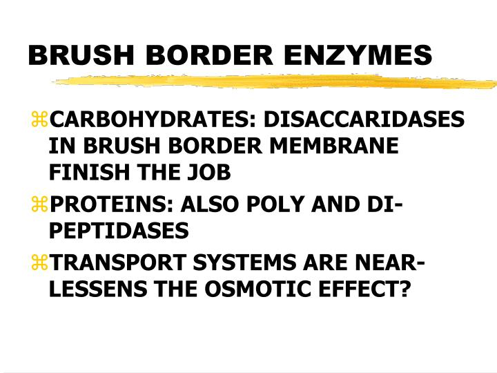 BRUSH BORDER ENZYMES