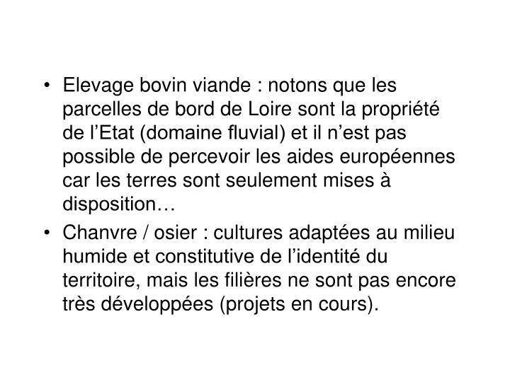 Elevage bovin viande : notons que les parcelles de bord de Loire sont la proprit de lEtat (domaine fluvial) et il nest pas possible de percevoir les aides europennes car les terres sont seulement mises  disposition