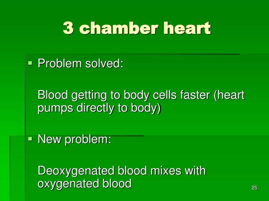 3 chamber heart