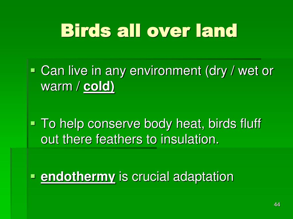Birds all over land