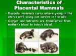 characteristics of placental mammals