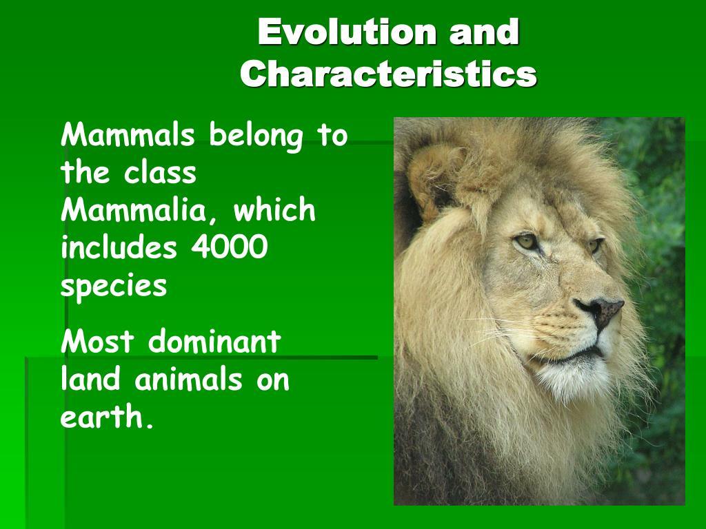 Evolution and Characteristics
